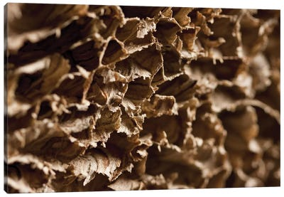 Wasp Nest III Canvas Art Print