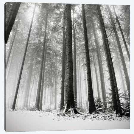 Only the Forests Know Why, Oberstaufen, Germany, 2013  Canvas Print #BMN8480} by Ronny Behnert Canvas Wall Art