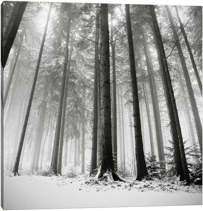 Only the Forests Know Why, Oberstaufen, Germany, 2013  Canvas Art Print