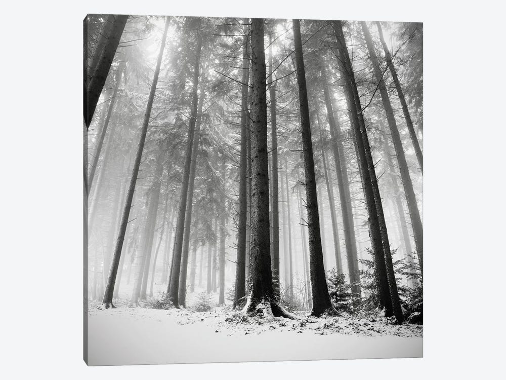 Only the Forests Know Why, Oberstaufen, Germany, 2013  by Ronny Behnert 1-piece Canvas Art Print