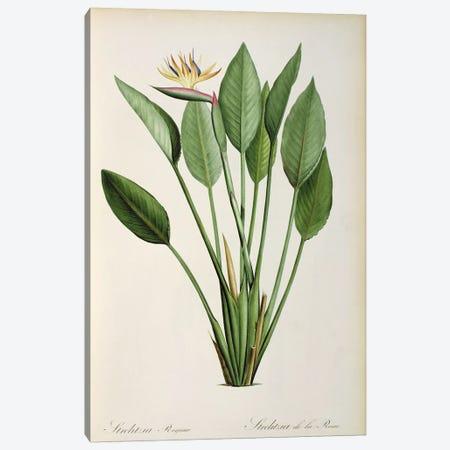 Strelitzia Reginae, from 'Les Strelitziaceae' Canvas Print #BMN850} by Pierre-Joseph Redouté Canvas Print