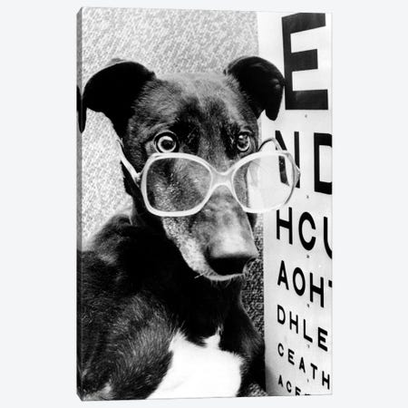 Greyhound Wearing Glasses February 1987 Canvas Print #BMN8568} by Rue Des Archives Art Print
