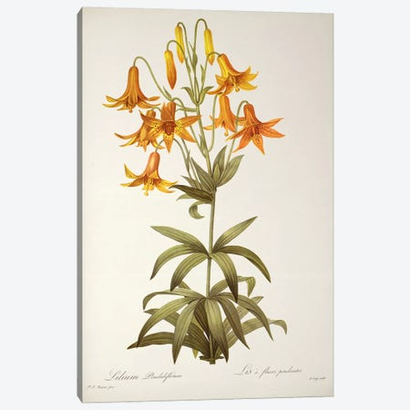 Lilium Penduliflorum, from `Les Liliacees', 1811  Canvas Print #BMN860} by Pierre-Joseph Redoute Canvas Art