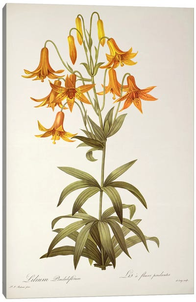 Lilium Penduliflorum, from `Les Liliacees', 1811  Canvas Art Print