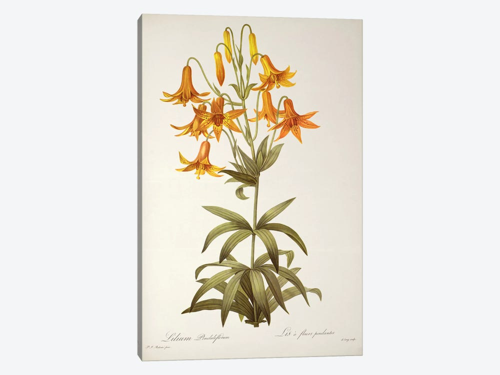 Lilium Penduliflorum, from `Les Liliacees', 1811  by Pierre-Joseph Redouté 1-piece Canvas Art