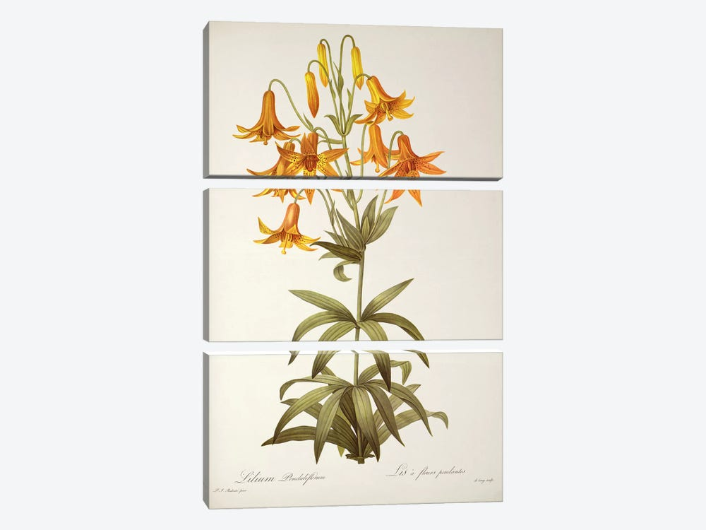 Lilium Penduliflorum, from `Les Liliacees', 1811  by Pierre-Joseph Redouté 3-piece Canvas Artwork