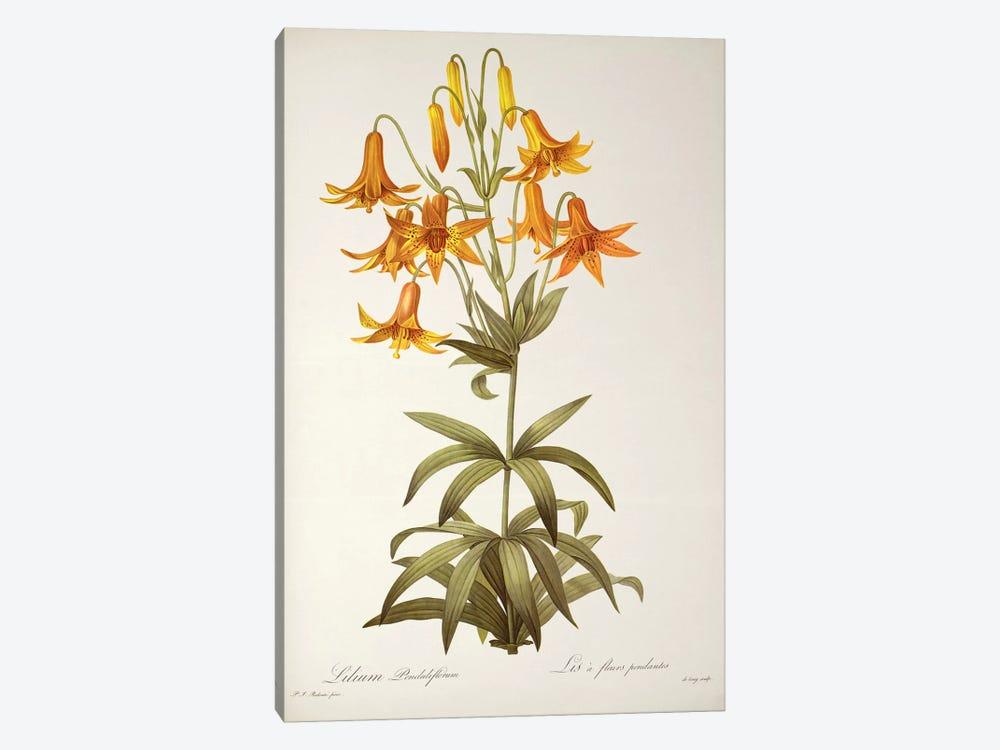 Lilium Penduliflorum, from `Les Liliacees', 1811  by Pierre-Joseph Redouté 1-piece Canvas Art