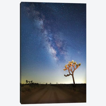 Joshua Tree Milkyway, 2017  Canvas Print #BMN8677} by SVP Images Canvas Wall Art
