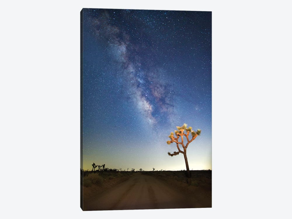 Joshua Tree Milkyway, 2017  by SVP Images 1-piece Canvas Wall Art
