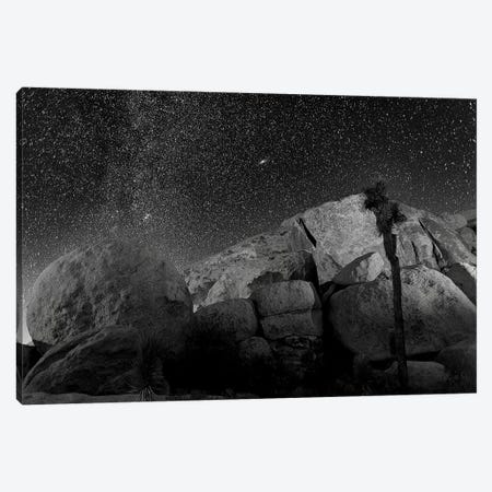 Joshua Tree Sea Of Stars, 2017  3-Piece Canvas #BMN8678} by SVP Images Canvas Print