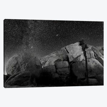 Joshua Tree Sea Of Stars, 2017  Canvas Print #BMN8678} by SVP Images Canvas Print