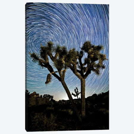 Joshua Tree Star Trails, 2017  3-Piece Canvas #BMN8679} by SVP Images Canvas Print