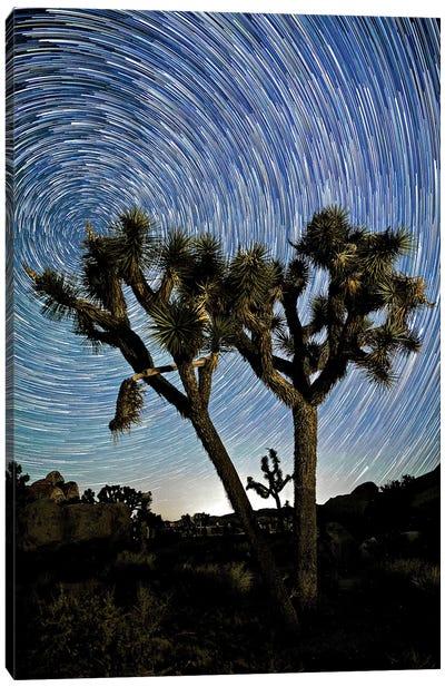 Joshua Tree Star Trails, 2017  Canvas Art Print