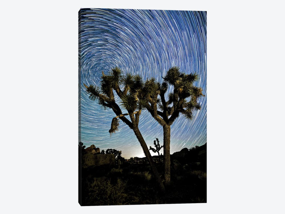 Joshua Tree Star Trails, 2017  by SVP Images 1-piece Canvas Artwork