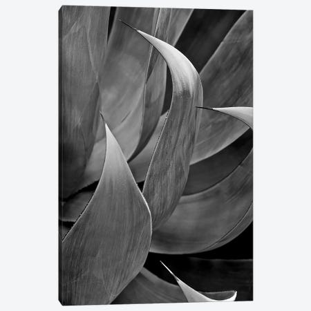 Pasadena Three Leaf Succulant, 2017  Canvas Print #BMN8691} by SVP Images Canvas Art Print