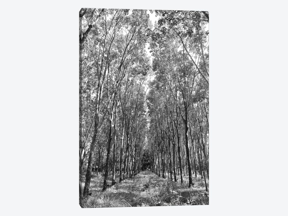 Rubber Trees Of Thailand, 2017  by SVP Images 1-piece Canvas Artwork
