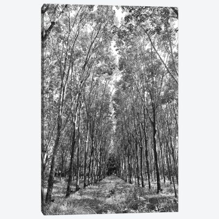 Rubber Trees Of Thailand, 2017  3-Piece Canvas #BMN8693} by SVP Images Art Print