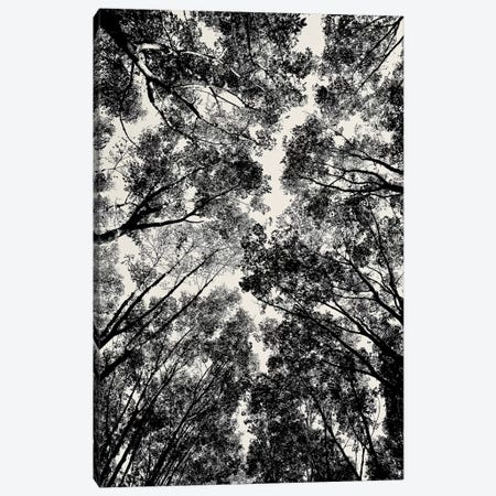 Up Through The Trees, 2018  Canvas Print #BMN8696} by SVP Images Canvas Artwork