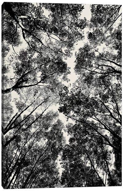 Up Through The Trees, 2018  Canvas Art Print
