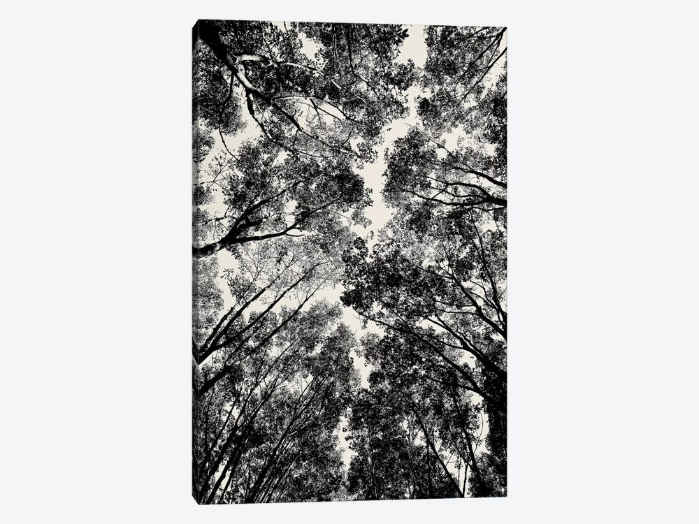 Up Through The Trees, 2018  by SVP Images 1-piece Canvas Print