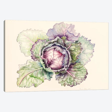 Cabbage from the market, 2015, watercolour Canvas Print #BMN8718} by Alison Cooper Canvas Wall Art