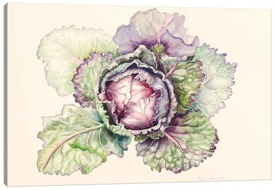 Cabbage from the market, 2015, watercolour Canvas Art Print
