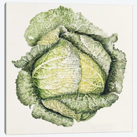 Savoy Cabbage  Canvas Print #BMN8720} by Alison Cooper Canvas Print