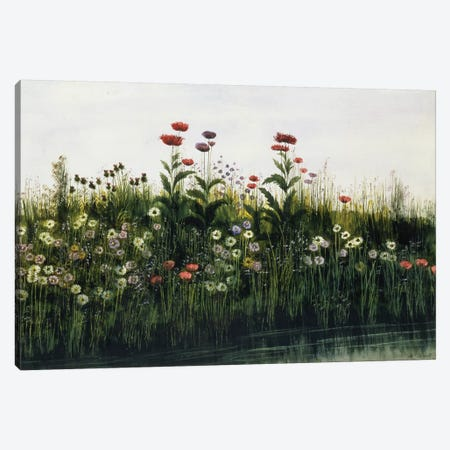 Poppies, Daisies and Thistles on a River Bank   Canvas Print #BMN8809} by Andrew Nicholl Canvas Artwork