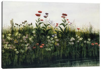 Poppies, Daisies and Thistles on a River Bank   Canvas Art Print
