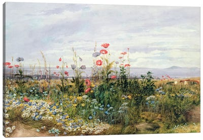 Wildflowers with a View of Dublin Dunleary  Canvas Art Print
