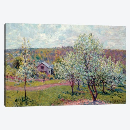 Spring in the Environs of Paris, Apple Blossom, 1879  Canvas Print #BMN8850} by Alfred Sisley Art Print