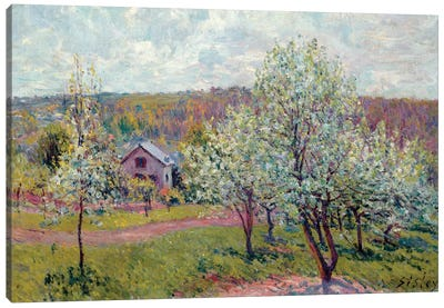 Spring in the Environs of Paris, Apple Blossom, 1879  Canvas Art Print