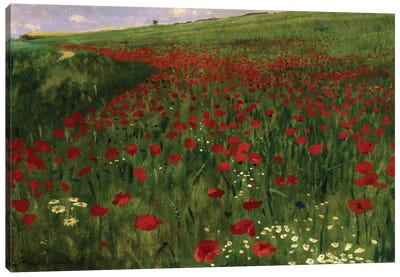 The Poppy Field, 1896  Canvas Art Print