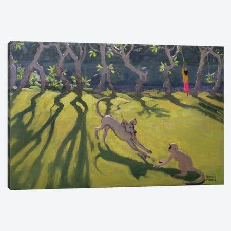 Dog and Monkey, Sri Lanka Canvas Print #BMN9037} by Andrew Macara Art Print