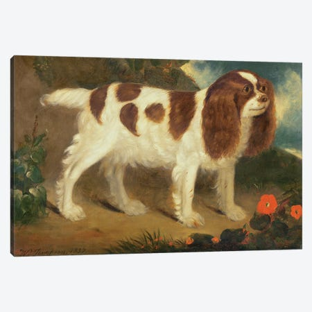 King Charles Spaniel Canvas Print #BMN904} by William Thompson Canvas Artwork