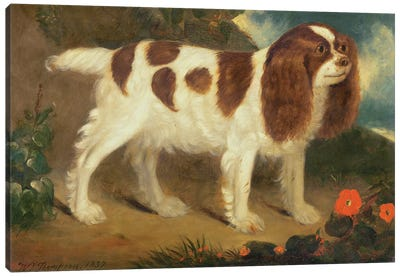 King Charles Spaniel Canvas Art Print