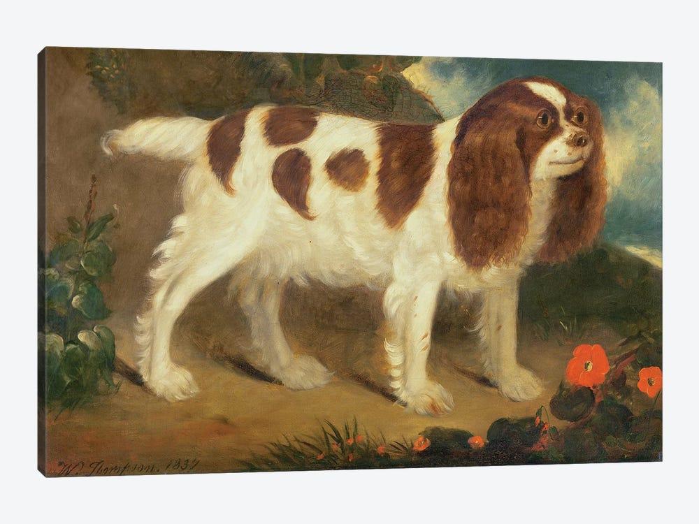 King Charles Spaniel by William Thompson 1-piece Art Print