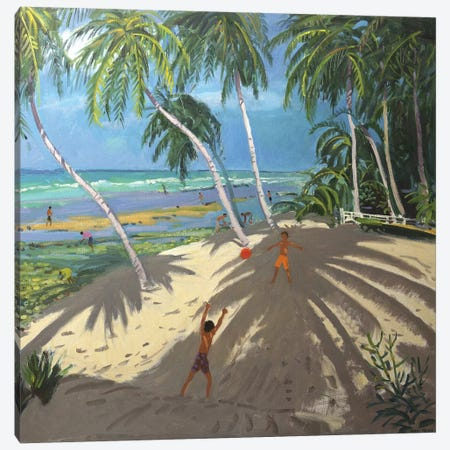 Palm Trees, Clovelly Beach, Barbados Canvas Print #BMN9050} by Andrew Macara Canvas Artwork