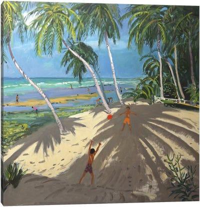 Palm Trees, Clovelly Beach, Barbados Canvas Art Print