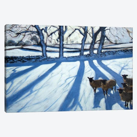 Sheep In Snow, Derbyshire Canvas Print #BMN9053} by Andrew Macara Canvas Art