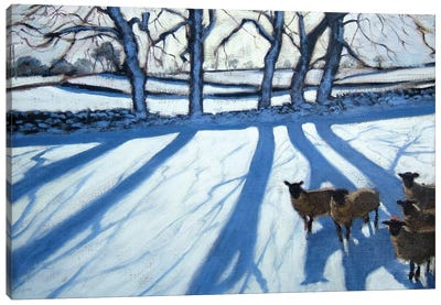 Sheep In Snow, Derbyshire Canvas Art Print
