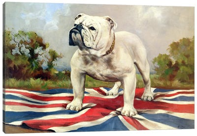 British Bulldog Canvas Print #BMN907