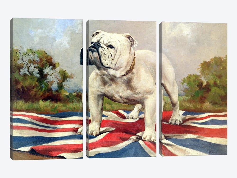 British Bulldog by English School 3-piece Canvas Artwork