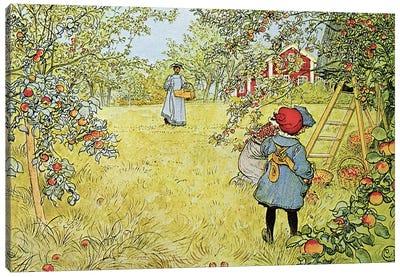 The Apple Harvest Canvas Art Print