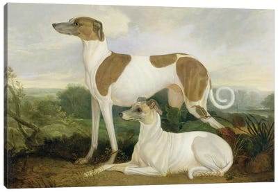 Two Greyhounds in a Landscape Canvas Art Print