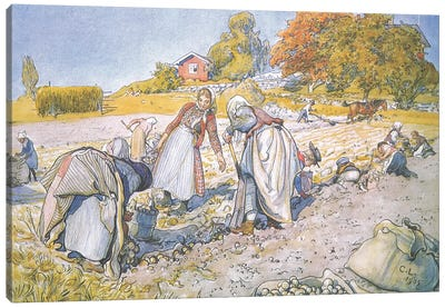 The children filled the buckets and baskets with potatoes Canvas Art Print