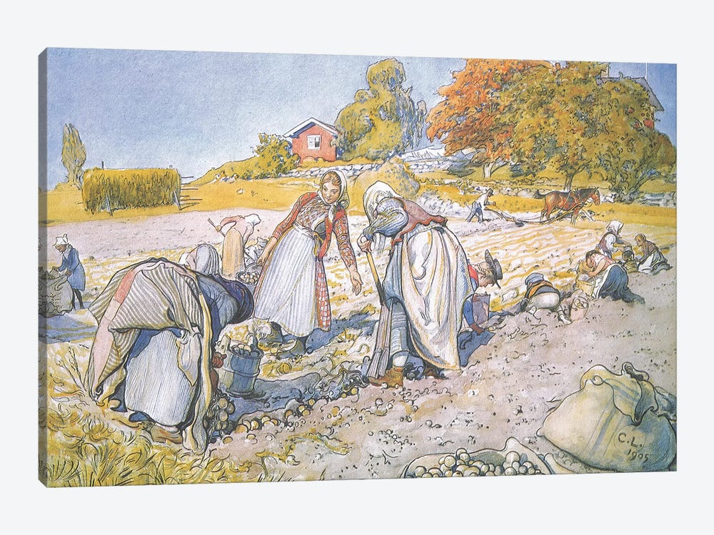 The children filled the buckets and baskets with potatoes by Carl Larsson 1-piece Canvas Print