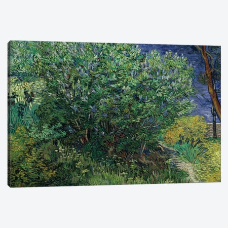 Lilac Bush, 1889 Canvas Print #BMN9443} by Vincent van Gogh Art Print