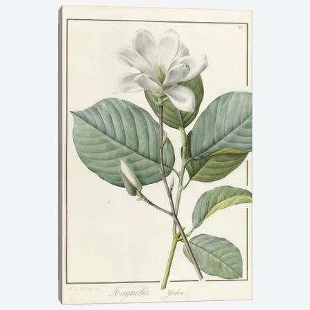 Magnolia yulan Magnolia denudata, 1812 Canvas Print #BMN9446} by Pierre-Joseph Redouté Canvas Art
