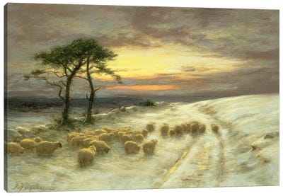 Sheep In The Snow Canvas Art Print